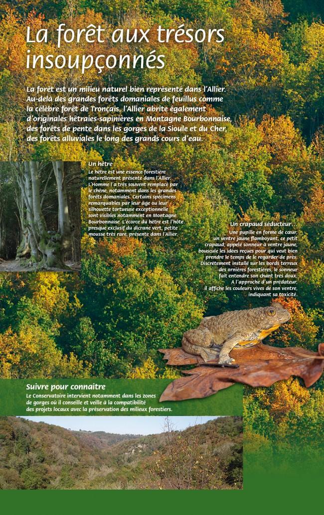 CEN Allier-forêts